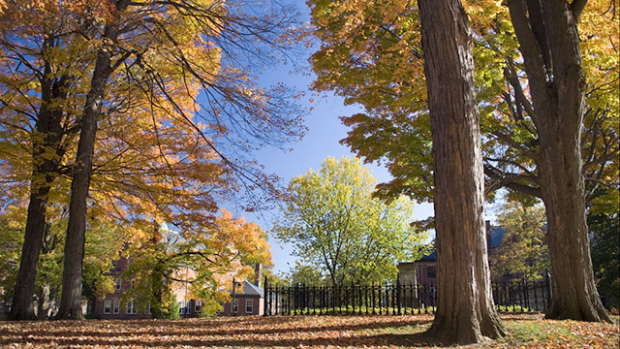Image of trees with autumn foliage.